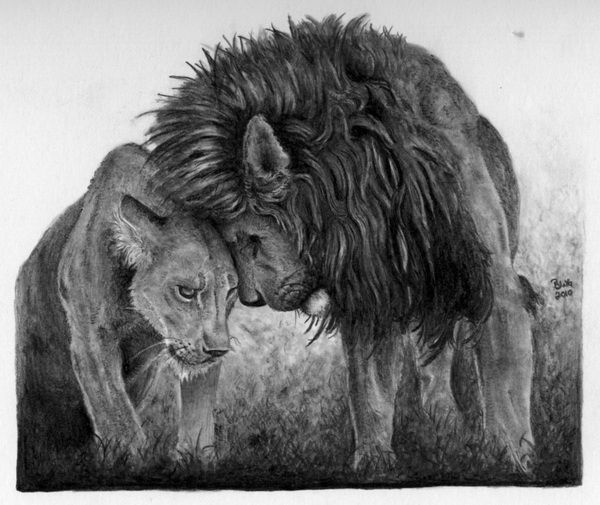 10+ Cool Lion Drawings for Inspiration | Lion drawing ...
