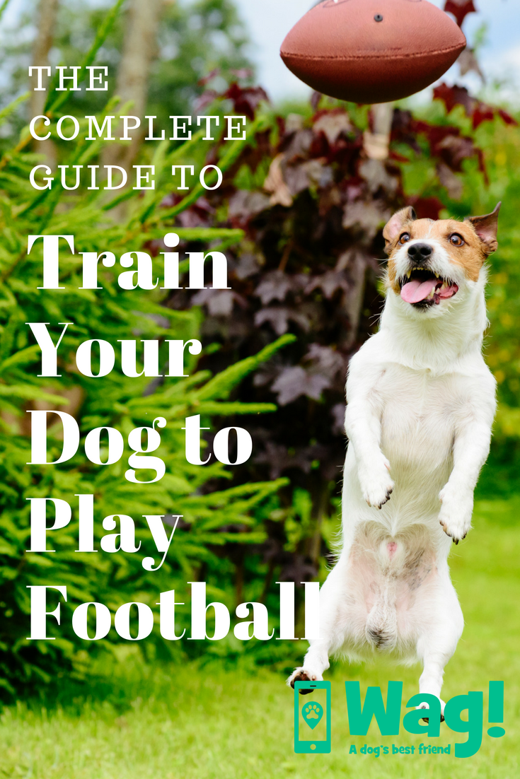 How to Train Your Dog to Play Football Training your dog