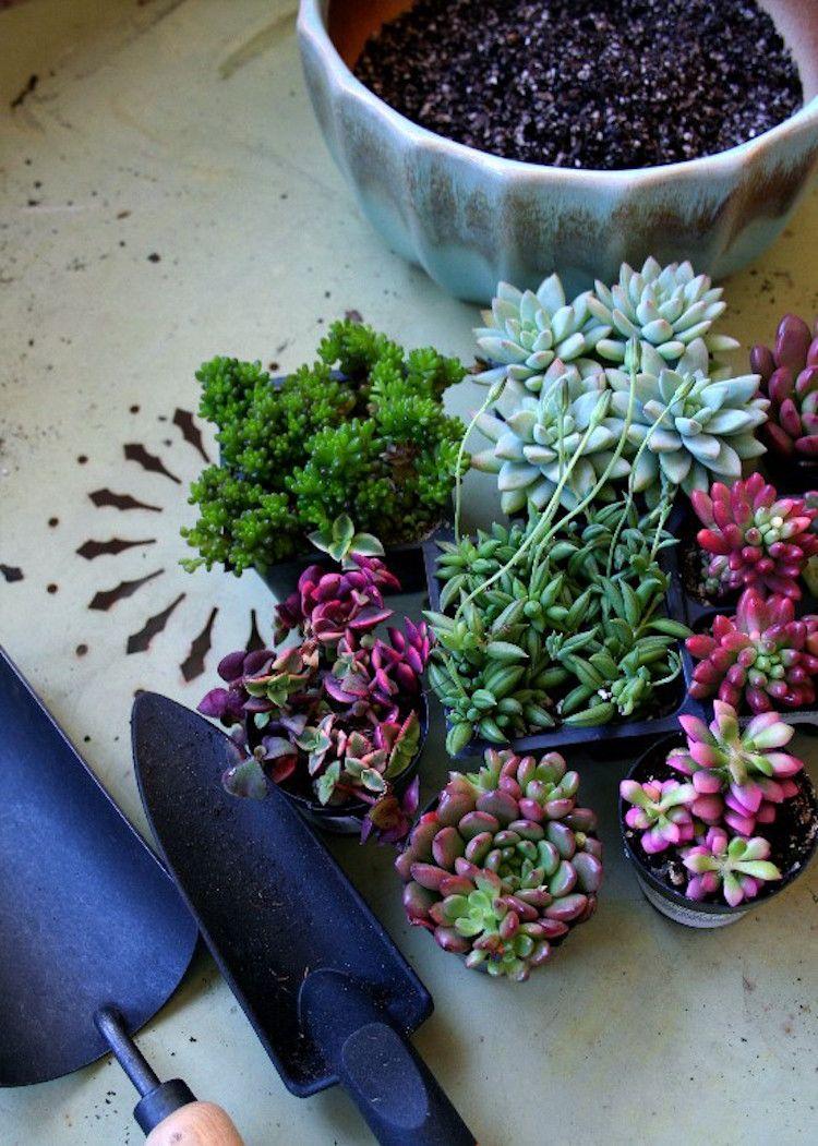 plantes grasses extrieur conseils et ides pour insuffler une touche artistique au jardin - Les Plantes Grasses D Exterieur