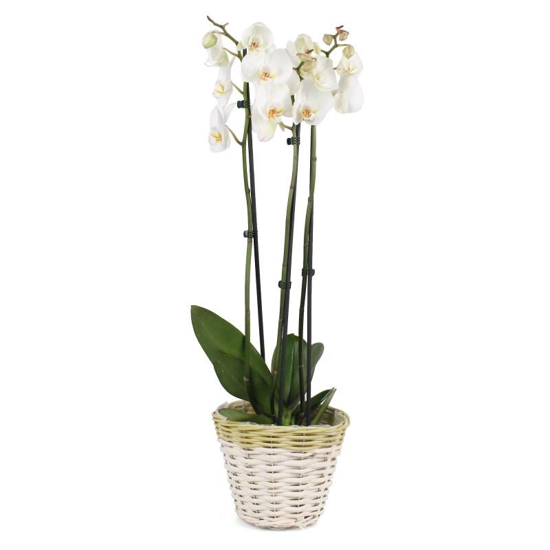 Oslonka Wiklinowa Z Folia Na Kwiaty 19x19x16h Cm Sklep Koszyki Net Pl Glass Vase Vase Glass