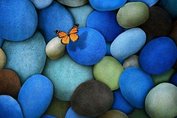 Fondos De Mariposas Imagenes Mariposas Pagina 23 Con Imagenes Fondos Mariposas Papel Pintado De Mariposa Descargar Fondos De Pantalla Gratis