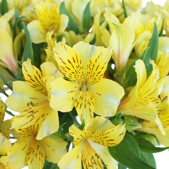 Bright Yellow Alstroemeria Flower Fiftyflowers Com Wedding Flowers Hydrangea Red Wedding Flowers Wedding Table Flowers