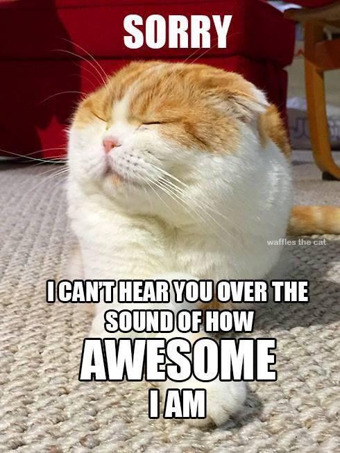 Waffles The Cat On Twitter Funny Cat Jokes Funny Cat Captions Funny Cat Memes