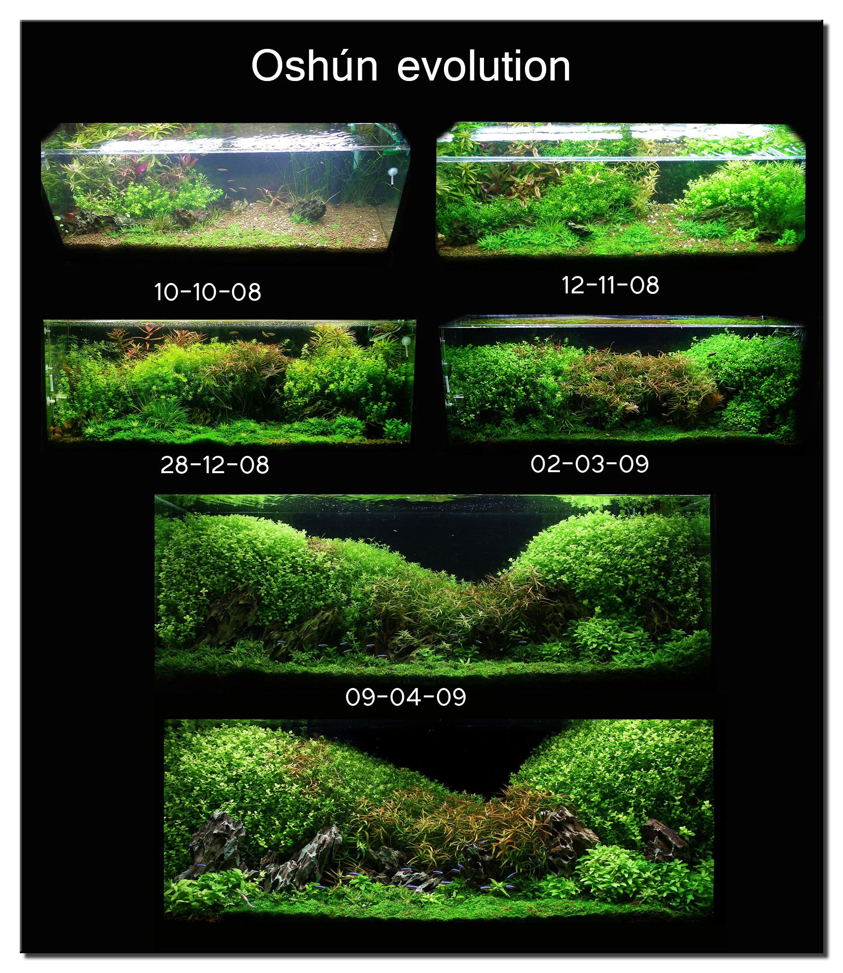 "Aquascape Of The Month July 2009: ""Oshun"