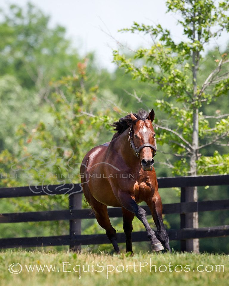 Ghostzapper is homebred by the Stronach Family Horses