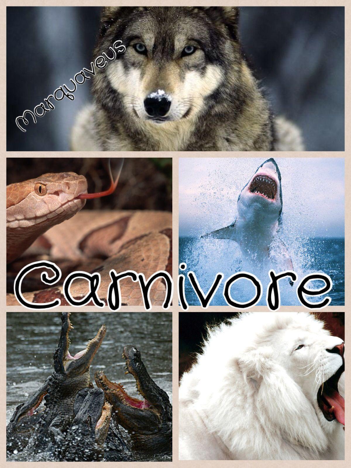Carnivore Herbivore Omnivore Oh My