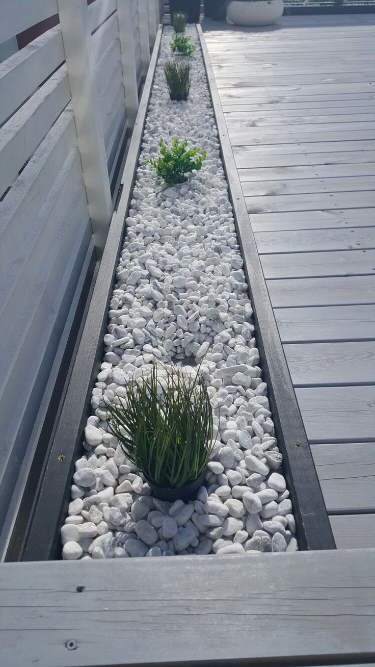 Photo of Rocks and plants – Pflanzen ideen