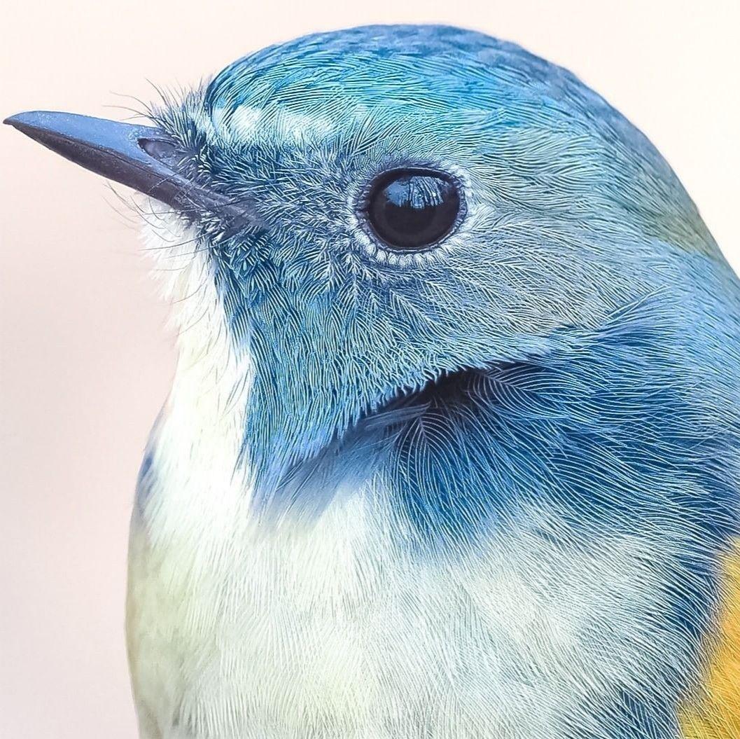 Idea De Alma En Green Animales Aves Dibujos