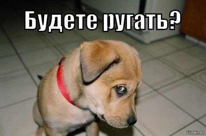 расскажем вполне картинка собачка просит прощения каталог