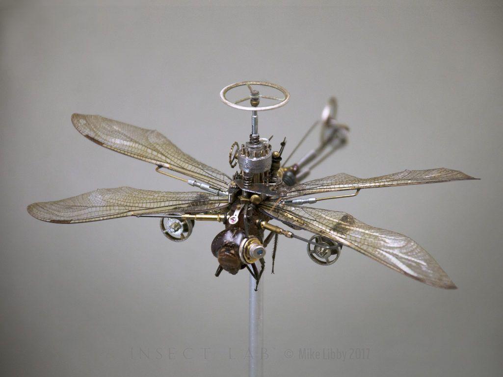 Odonata epieaschna heros insect lab studio insecten