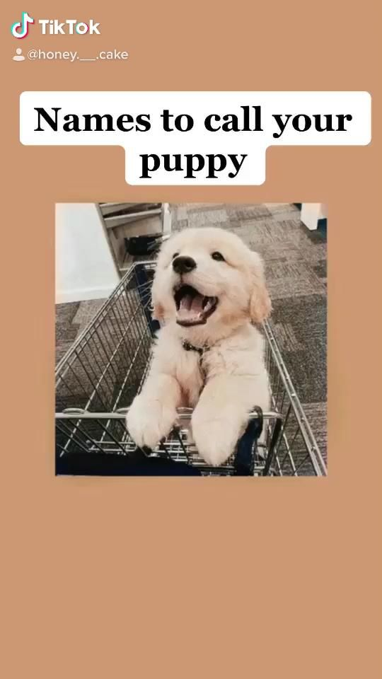 Follow Me On Tik Tok In 2021 Cute Animal Names Cute Puppy Names Puppies