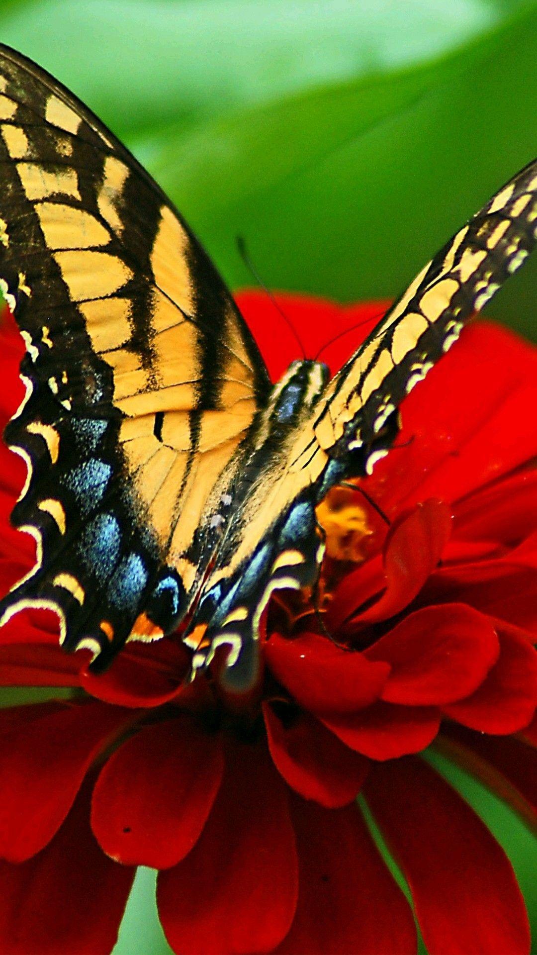 Beautiful yellow butterfly | Nature iphone wallpaper ...