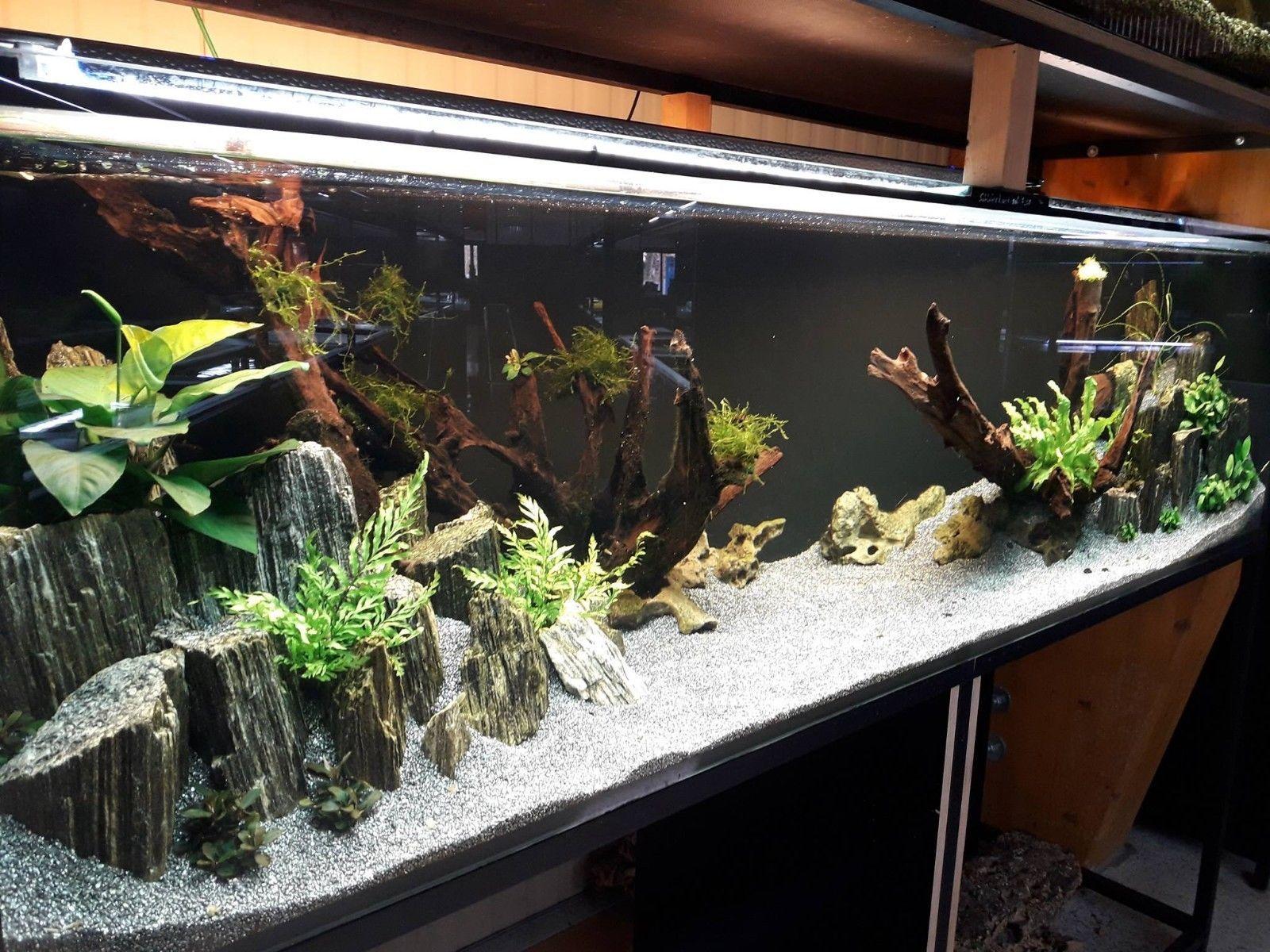 40 Kg Natural Wood Stone For An Aquarium Aquascaping Iwagumi Style Ebay Ideias Para Aquario Aquarios Terrarios
