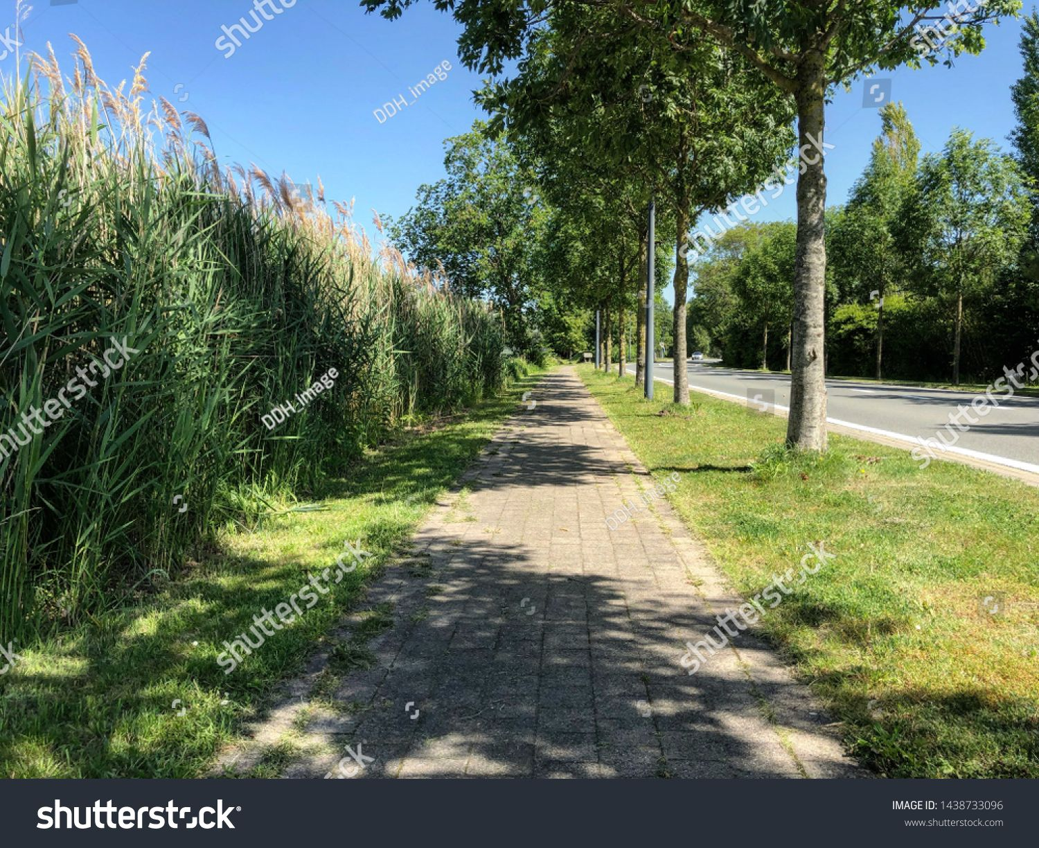 Outdoor Green Park Forest Next To River Rural Landscape Path With Trees And Grass And Modern Benche Sponsored Ad Forest Ri Park Forest Green Park Outdoor