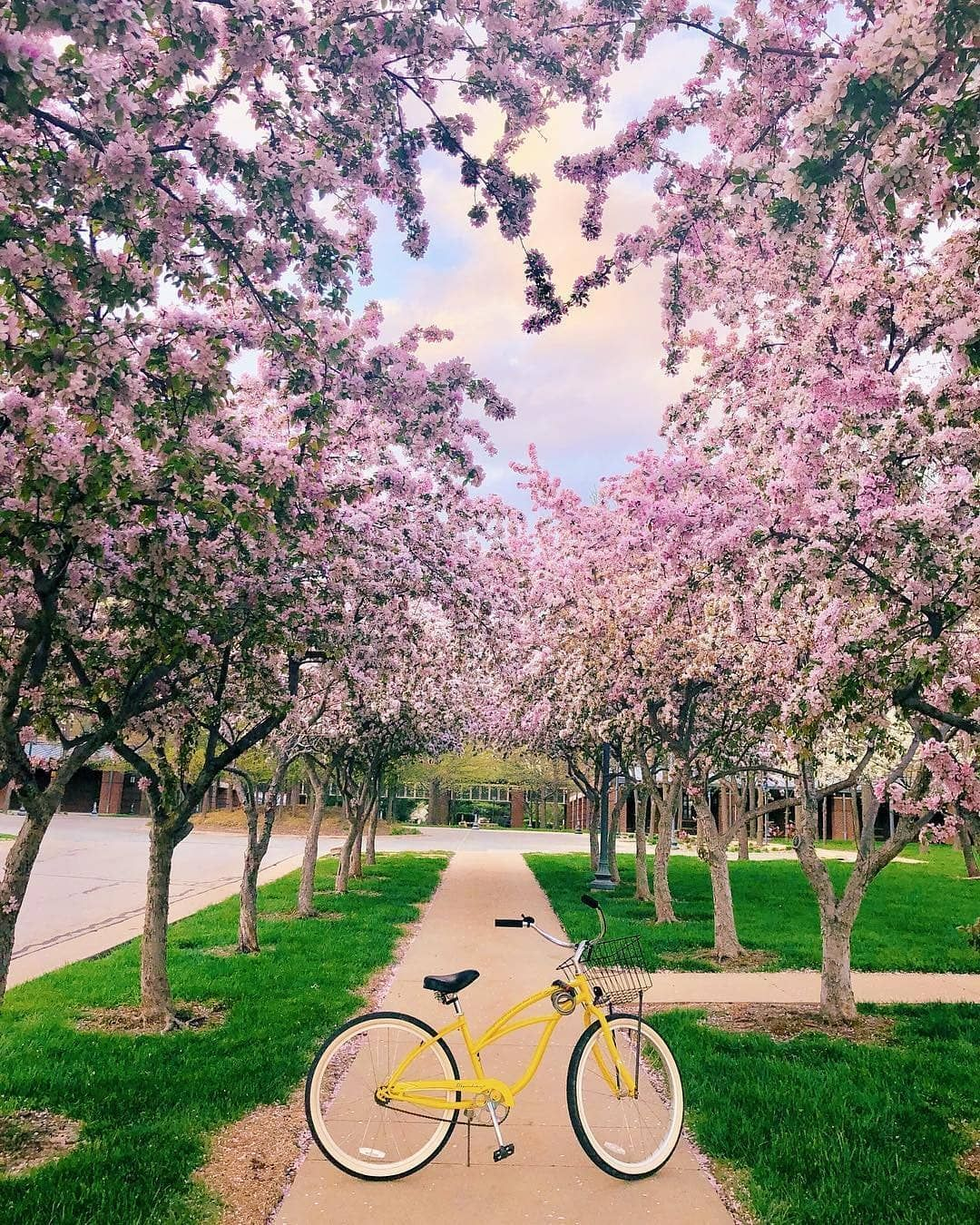 845 Likes 19 Comments The Best Of Kansas City Best Of Kc On Instagram Spring Winds May Blow The Blooms Away Cherry Blossom Tree Blossom Trees Blossom