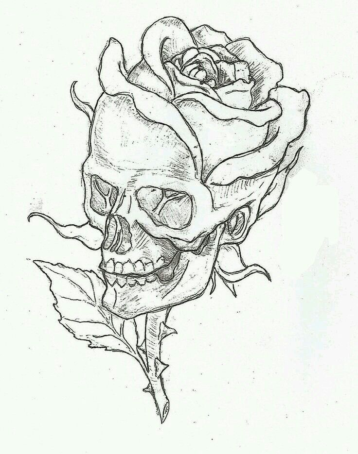 Skull Rose Roses Drawing Skull Art Skull Drawing