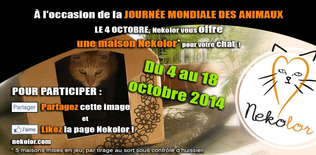 Gagnez une maison Nekolor pour votre chat ! https://www.facebook.com/pages/Nekolor/431945753495494?fref=ts