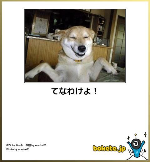 動物だけの笑える Bokete 画像50選 ペット日和 おもしろワンちゃん 動物のジョーク 動物