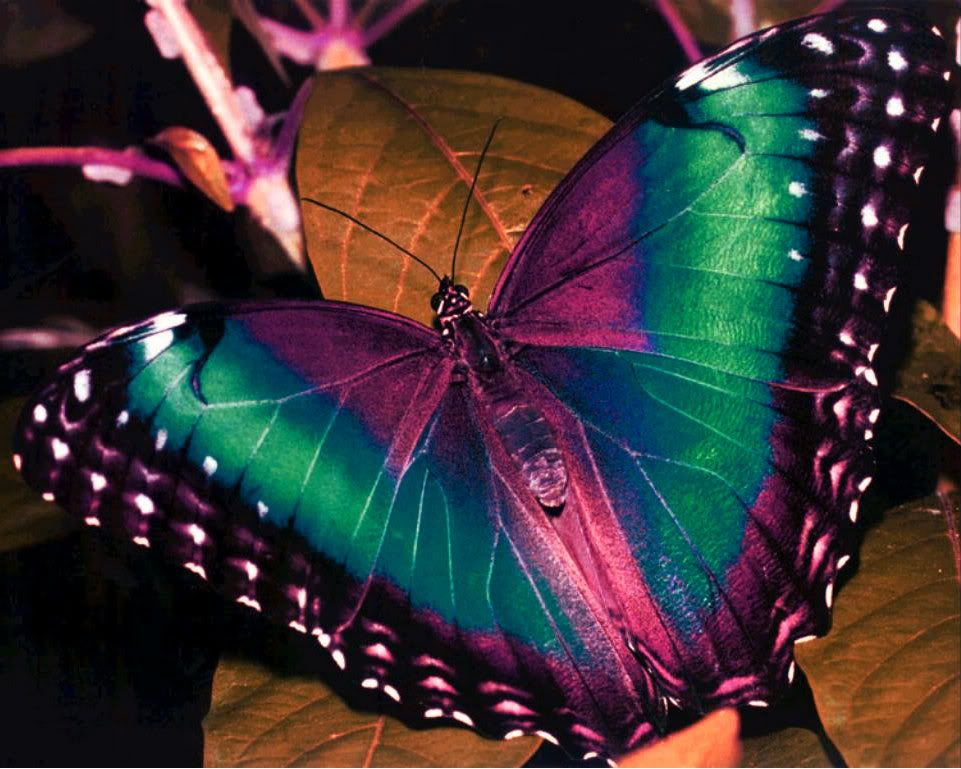 beautiful butterflies | Beautiful Colorful Butterfly ...