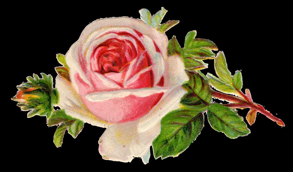 free vintage rose clip art pinterest clip art free printables rh pinterest com vintage flower clip art free vintage flower clipart black and white