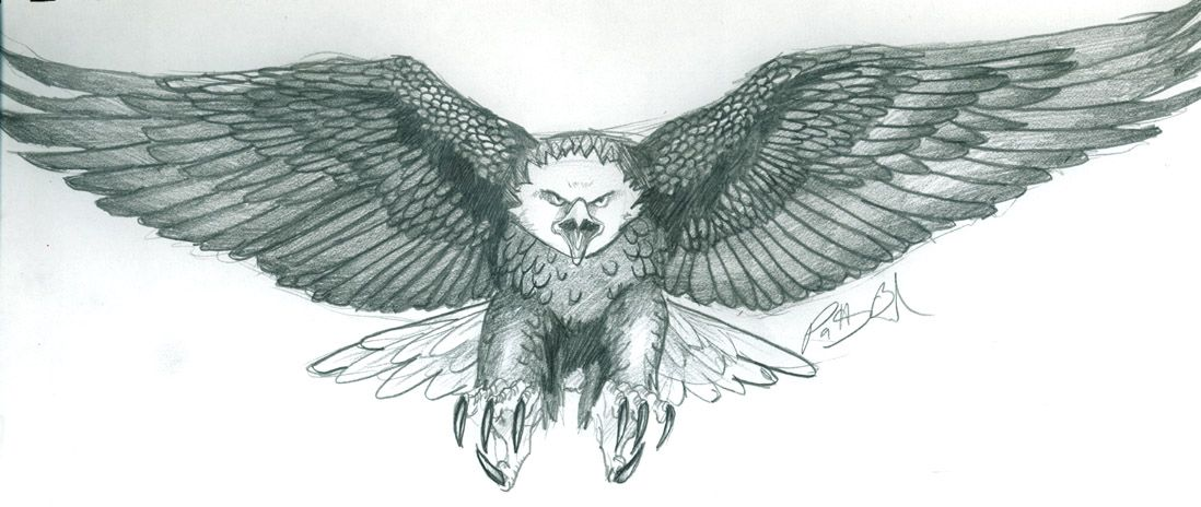 How To Draw A Eagle Hard