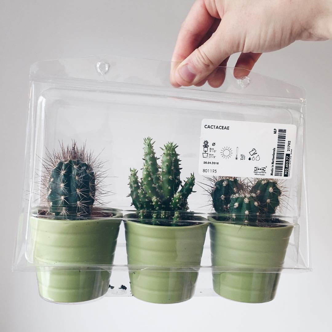 cayooot cactus planter pots from ikea prickly green babies pinterest planter pots cacti. Black Bedroom Furniture Sets. Home Design Ideas