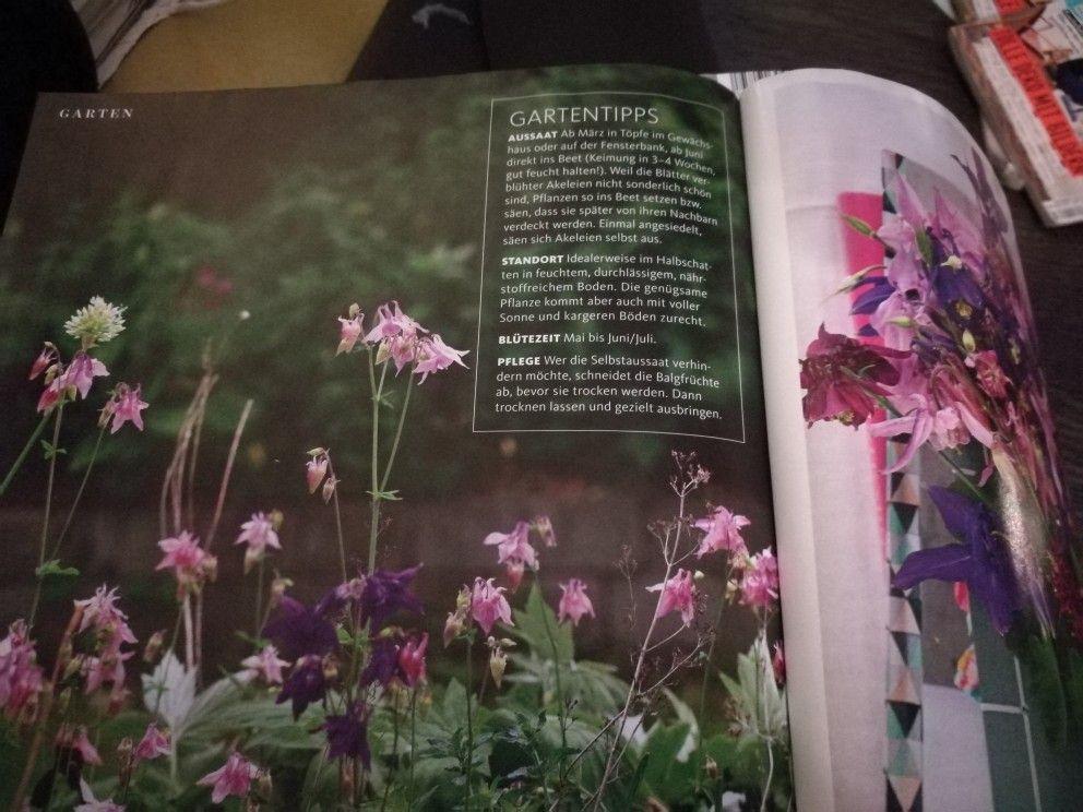 Pin Von Nina Niemeyer Auf Gartengestaltung Gartentipps Akelei Gartengestaltung