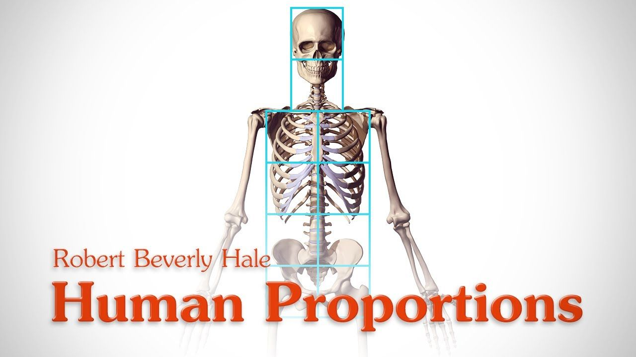 Human Figure Proportions - Cranial Units - Robert Beverly Hale (+ ...