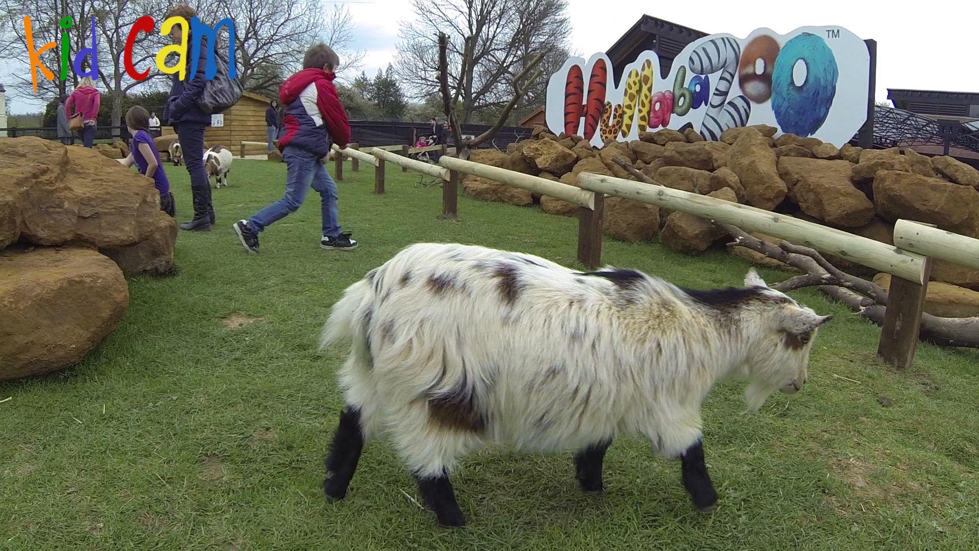 london farm zoo - Поиск в Google