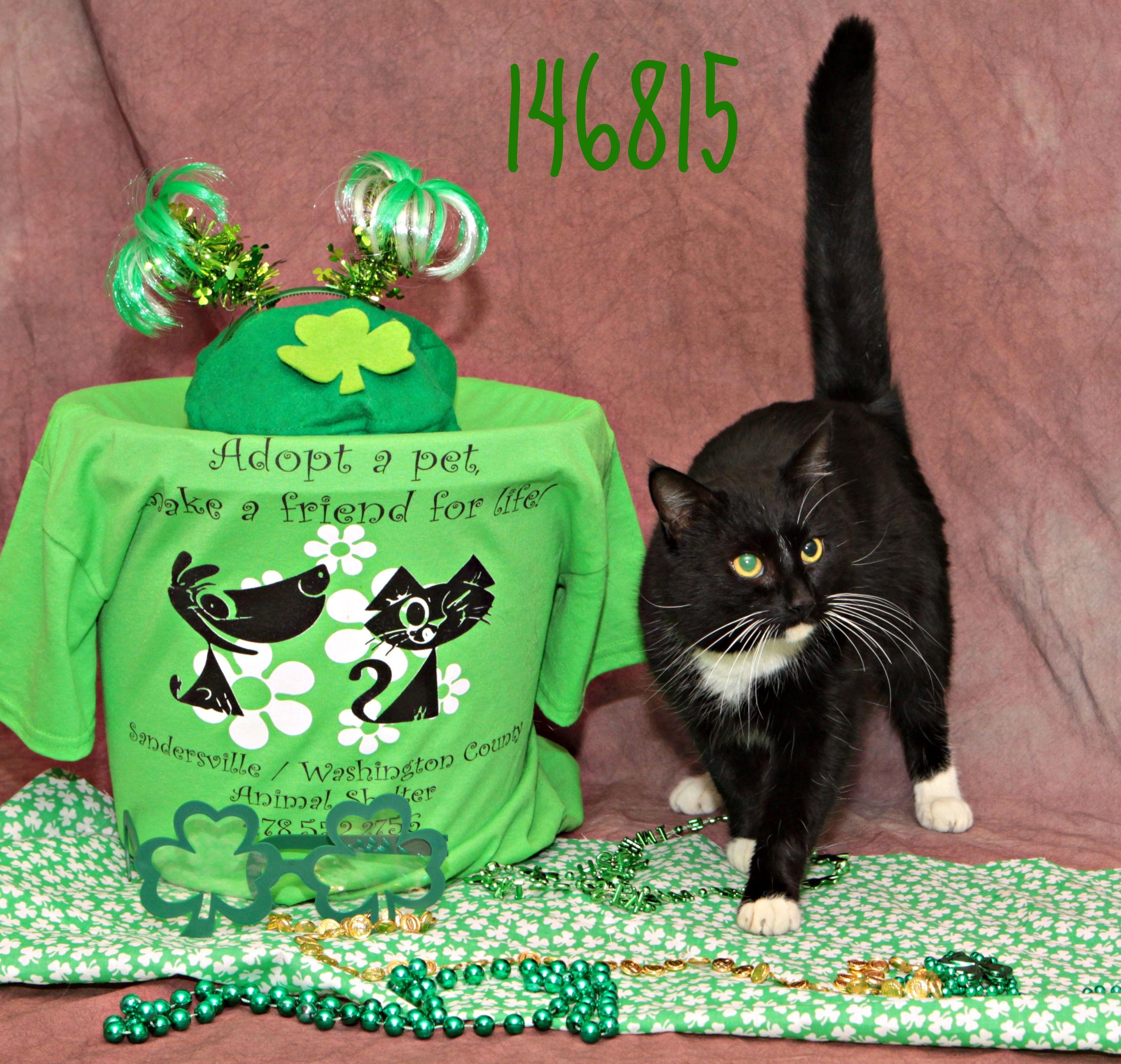 Greene Adopt Me Today For More Information Please Visit Www Sandersvilleanimalshelter Com I Am Located In Sandersville Ga Animal Shelter Adoption Pets
