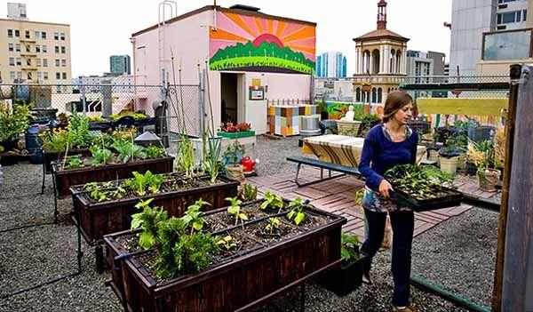 Orto da balcone o terrazzo   ORTO   Pinterest   View source