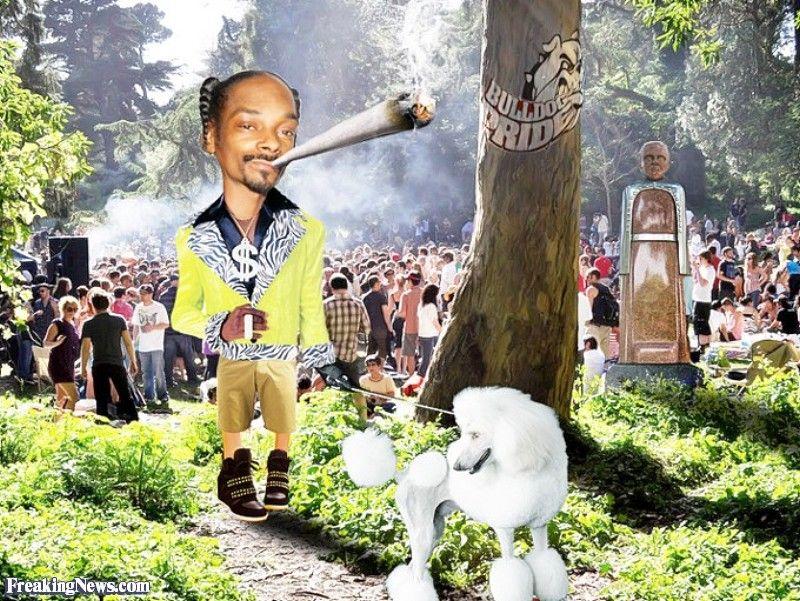 Snoop Dogg Smoking a Bong Walking a Poodle