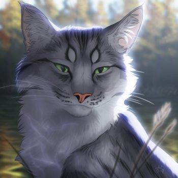 pinmyst3ri0 on warrior cats  warrior cats fan art