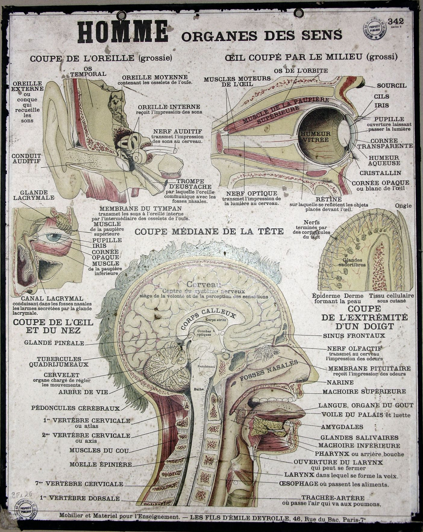 Vintage Anatomy Poster French (head) | Med | Pinterest | Anatomy ...