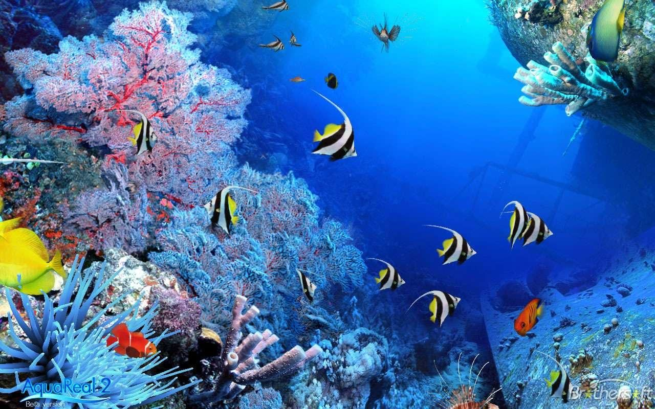 Fish aquarium screensaver - Backgrounds Aqua Real 3d Aquarium Utilizing Advanced Technologies
