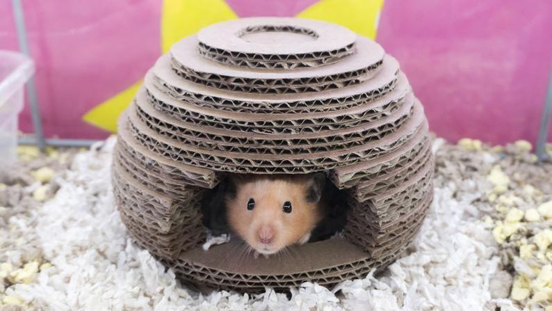 Diy Cardboard Beehive Hamster House V 2020 G Igrushki Dlya