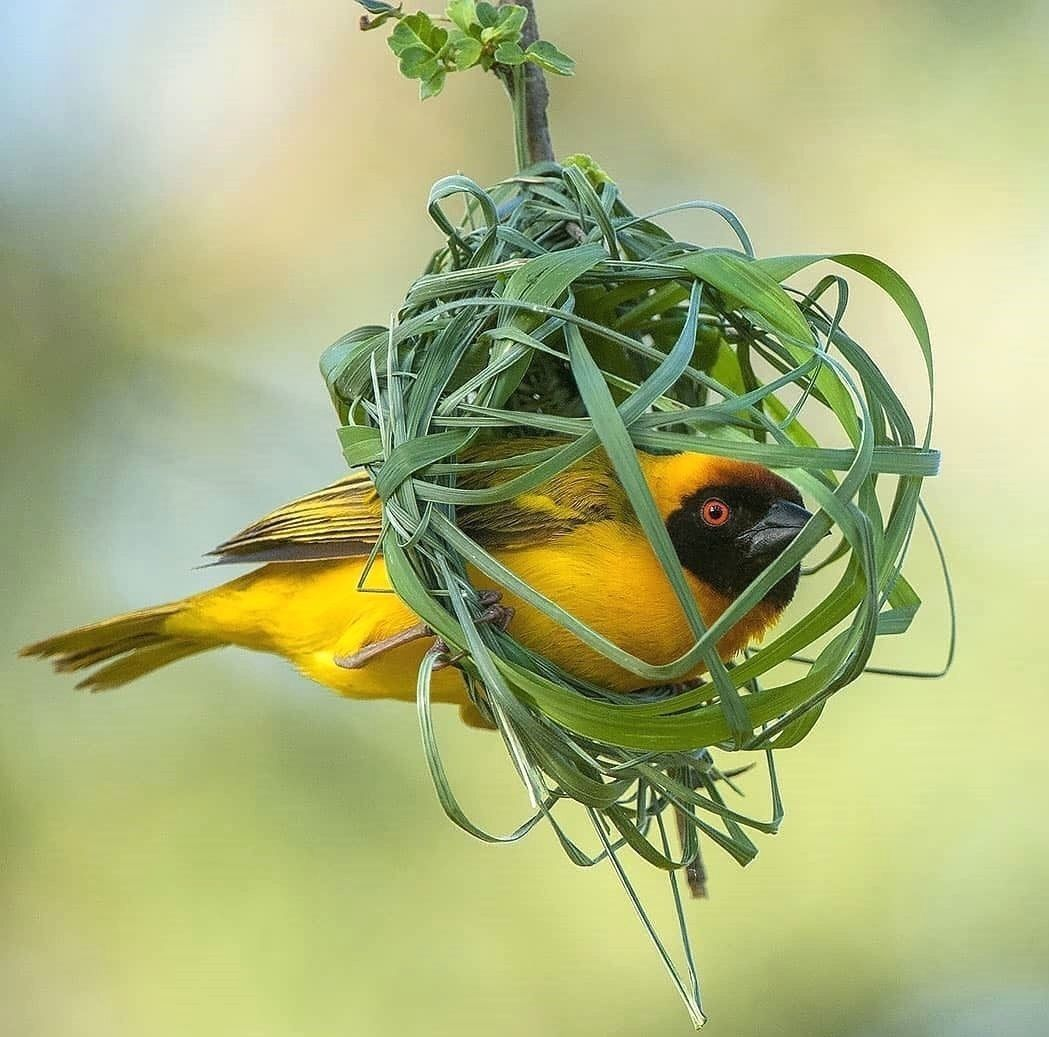 Pin By Rachel Ferencz On Earthly Delights With Images Beautiful Birds Bird Photography Backyard Birds