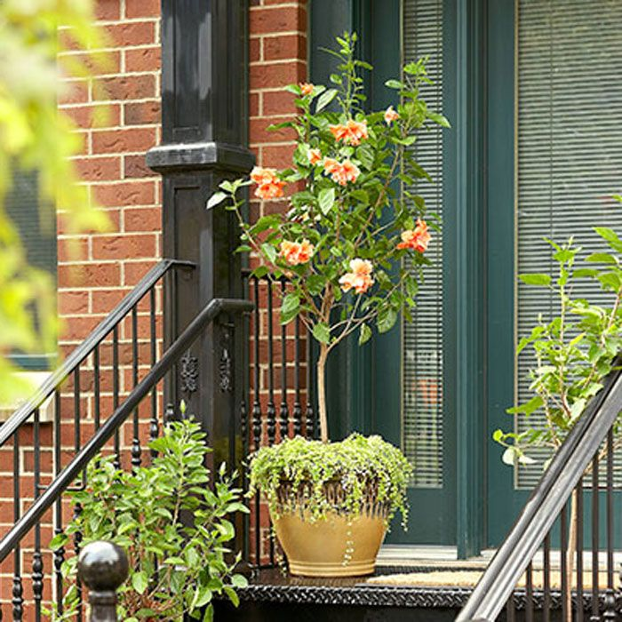 gardenscaping with containers from lowes pretty meets city with this potted hibiscus 104959. Black Bedroom Furniture Sets. Home Design Ideas