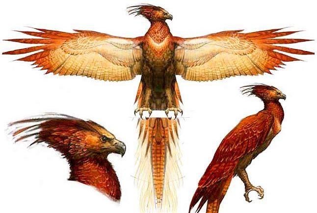 Fawkes The Phoenix Concept Artwork Hp5 4m Jpg 646 434 Animaux Harry Potter Creatures Mythiques Animal Fantastique