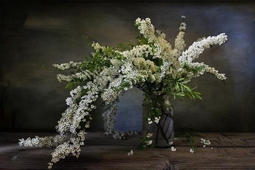 С букетом спиреи. Фотограф Марина Орлова | Цветы, Букет ...