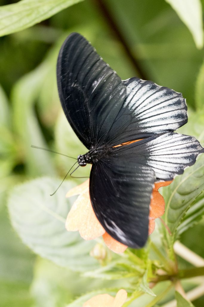 Butterfly by julie.johnson931