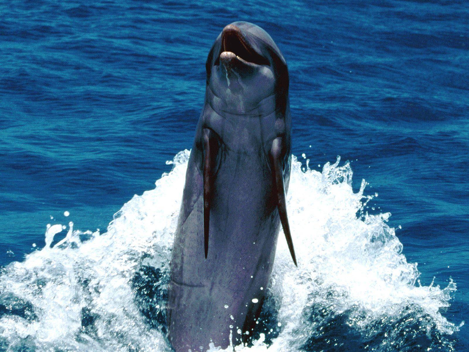Backward Swimming Feat.jpg 1600×1200 pixels Dolphins