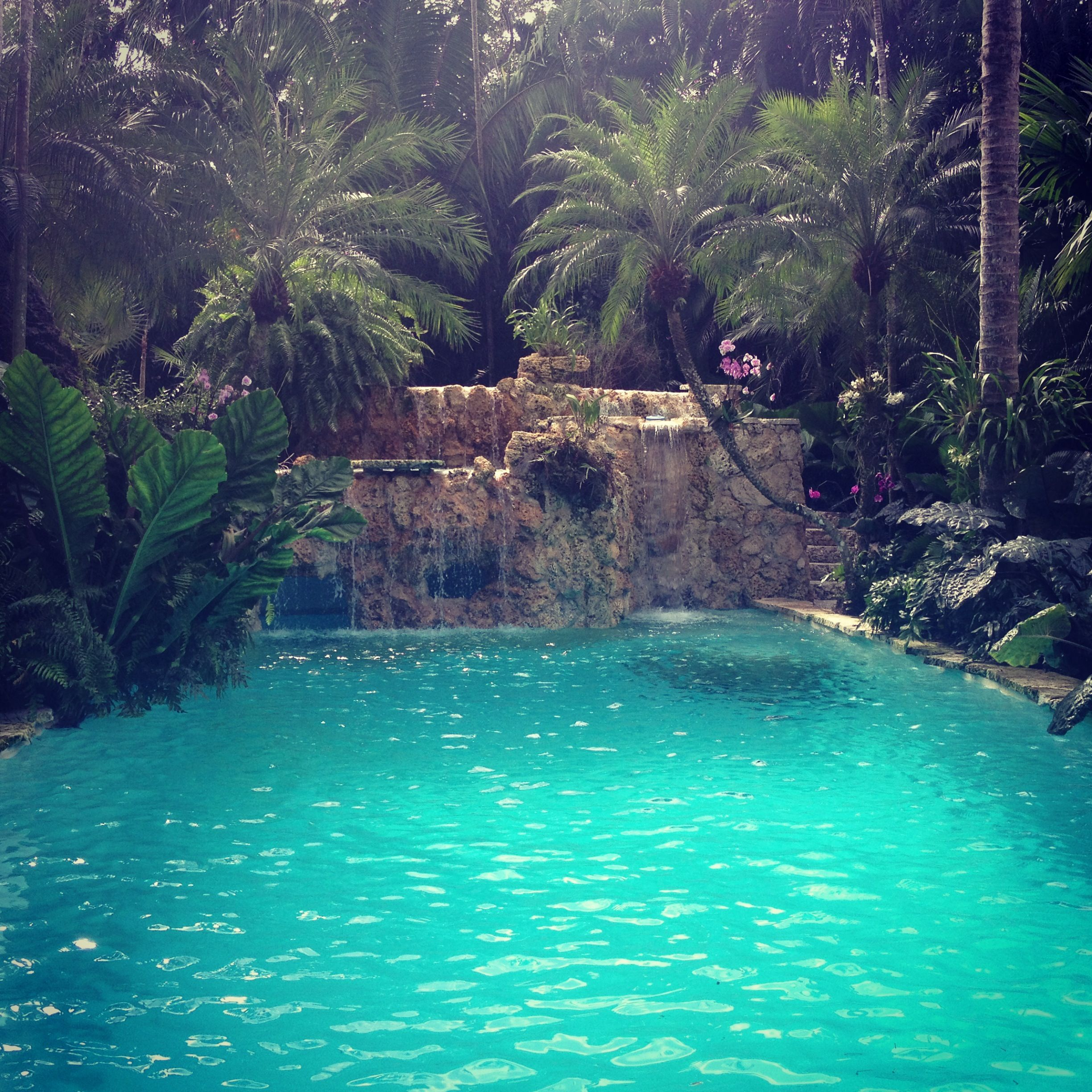 Stunning pool in south grove coconutgrove pool life