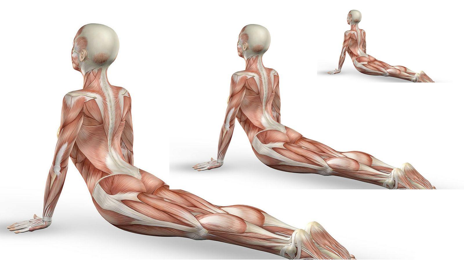 Kinesiology Of Yoga Gill Solberg Ytt By Laura Bonini Pinterest