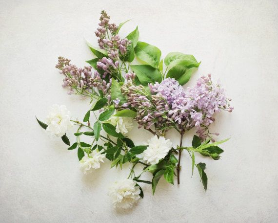 "Flower Still Life Photography, lilac flowers, white roses, pastel,  white spring flower art, nature still life  ""Lilac and Rose"""