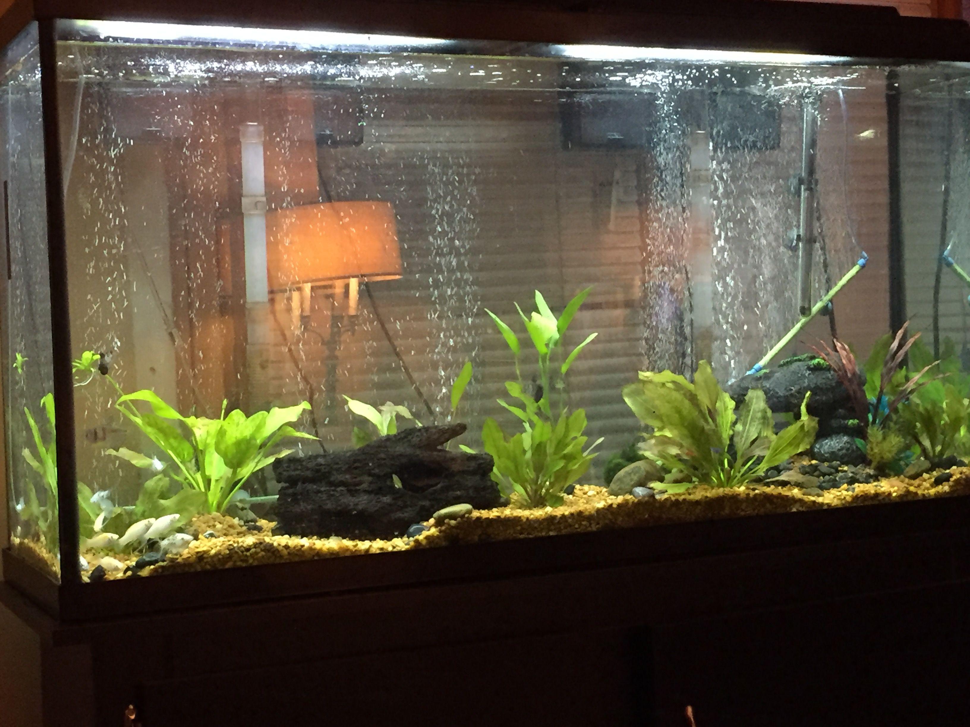 Fish Tank Moving