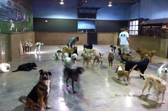 Atlanta Dog Boarding Dog Daycare Dog Grooming In Midtown Atlanta