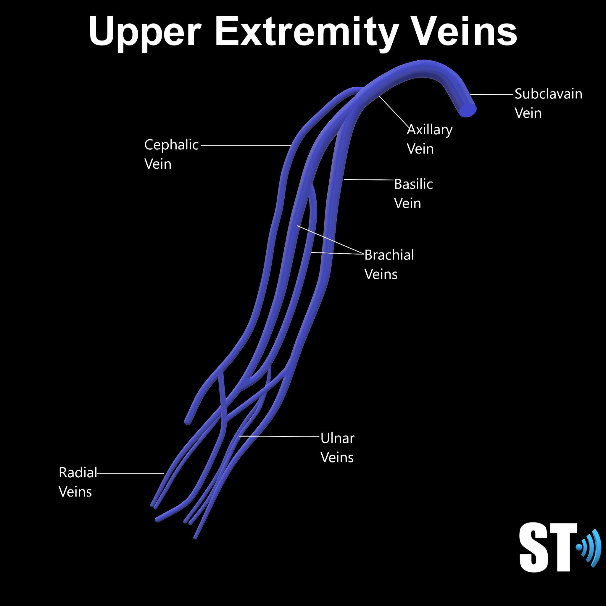 Upper Extremity Venous Doppler Sonographic Tendencies In