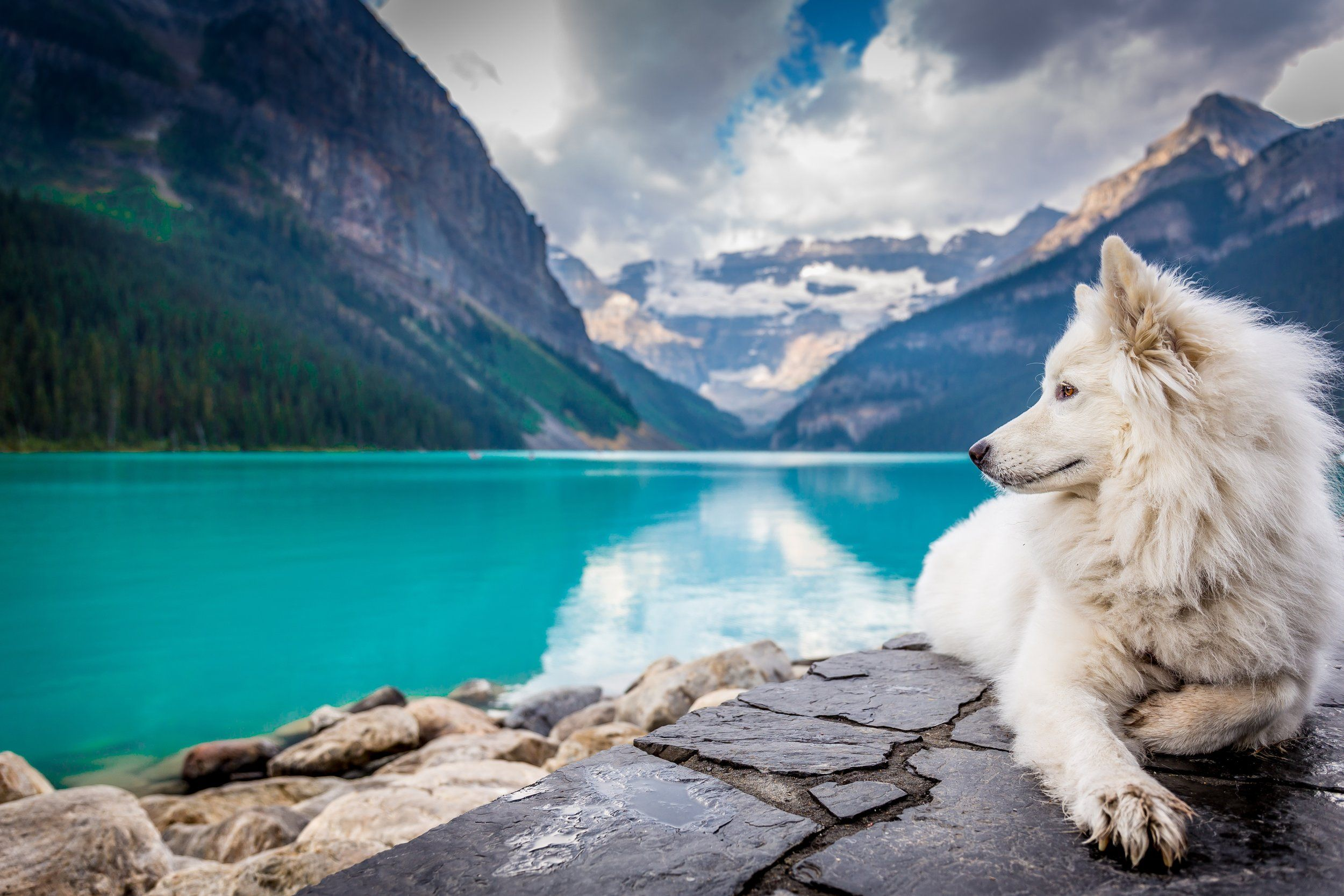 Quicky FAQ's on Vet Care for Dogs Dog friendly hotels