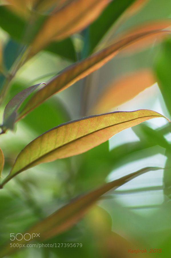Autumn Letter  by KenjirohTukiyama #nature
